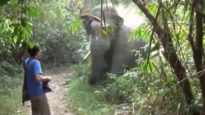 Un touriste stoppe net un éléphant qui le charge