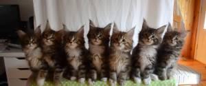 Tester les réflexes de 7 chatons