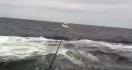 Une baleine en plein saut