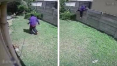 Un cambrioleur va très vite détaller à cause d'un animal féroce qui garde la maison