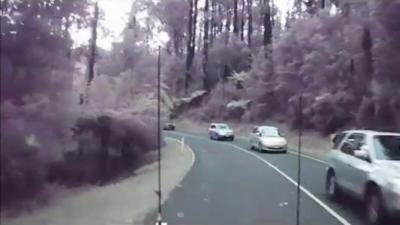 Cet automobiliste manque de peu de se faire écraser par une énorme chute d'arbres