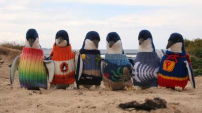 Un Australien de 109 ans tricote des petits pulls pour les pingouins blessés