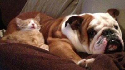 14 chats qui prennent les chiens pour des gros coussins