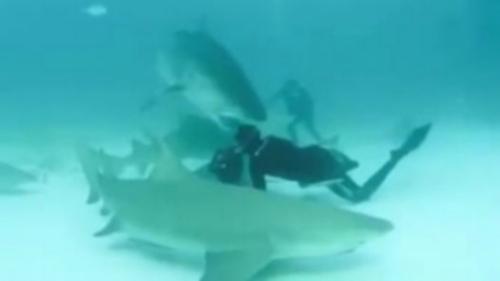 Quand un requin essaie de mordre la tête d'un photographe