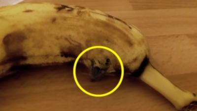Vous n'allez plus jamais vouloir manger de banane après avoir vu ça