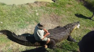 Monter sur un crocodile de plus de 800kg comme si c'était un cheval