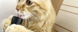 Quand un chat joue avec un aspirateur