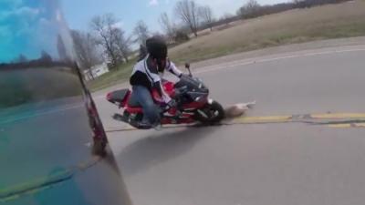 Un chien manque de tuer deux motards en traversant la route