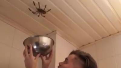 Un homme essaie d'attraper une grosse araignée au plafond avec un bol
