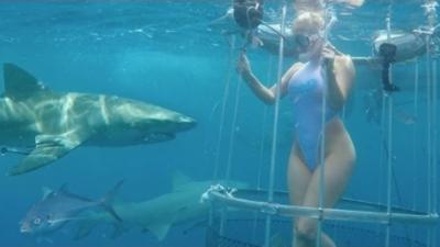 Une actrice du X se fait mordre le pied par un requin pendant un direct sur un site de charme