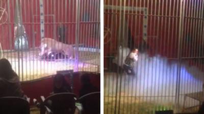 Un lion saute à la gorge de son dompteur pendant un numéro de cirque en France