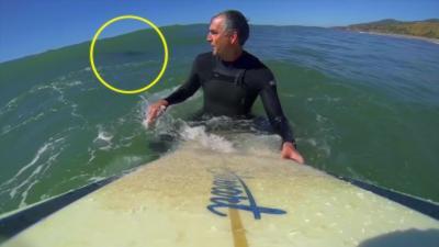 Un surfeur seul au large se rend compte qu'un requin se trouve juste derrière lui