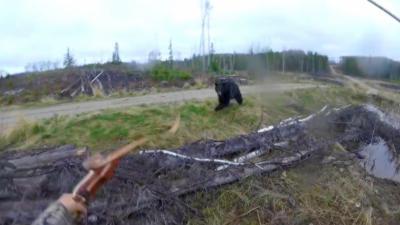 Un chasseur à l'arc se fait charger par un ours noir