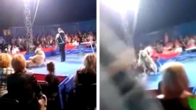 Un ours attaque une partie du public pendant un numéro de cirque