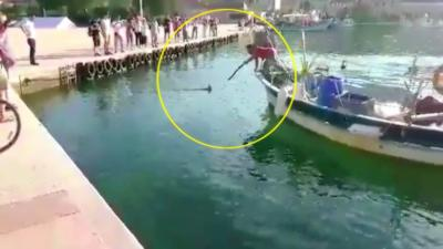 Un pêcheur harponne illégalement un marlin dans le port de Saint-Mandrier dans le Var