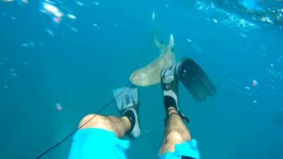 Un pêcheur au harpon se fait mordre la jambe par un requin