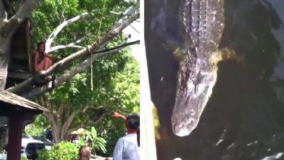 Des jeunes filles sautent et se baignent dans une rivière juste à côté d'un alligator
