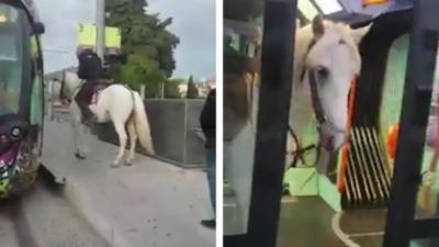 Un homme monte dans le tramway de Montpellier à cheval