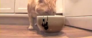 Comment démêler des écouteurs en utilisant un chat