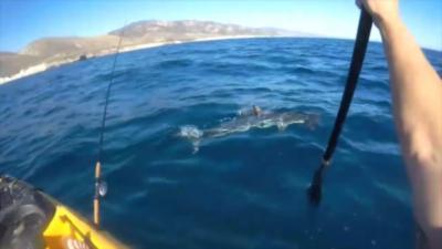 Un kayakiste se fait attaquer par un requin très agressif qui ne le lâche plus