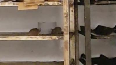 Des souris au rayon boulangerie d'un Carrefour dans l'Essonne