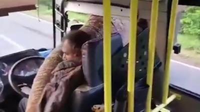 Un éléphant braque un bus pour des bananes