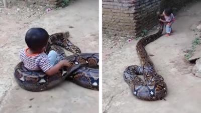Des parents inconscient laissent leur enfant jouer avec un python