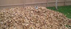 Un husky s'amuse comme un fou dans un tas de feuilles morte