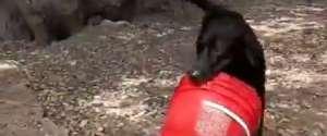 Un chien inséparable de son seau