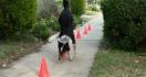 Un chien qui réalise 20 choses incroyables