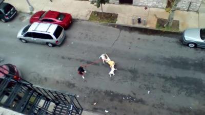 Deux pitbulls hors de contrôle s'en prennent à un homme dans la rue