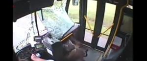 Une biche traverse le pare-brise d'un bus