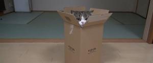 Maru le chat qui aime rentrer dans tout et n'importe quoi