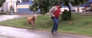 Une chèvre terrorise les passants au Brésil