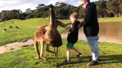 Un kangourou met un coup de poing à un enfant en plein visage