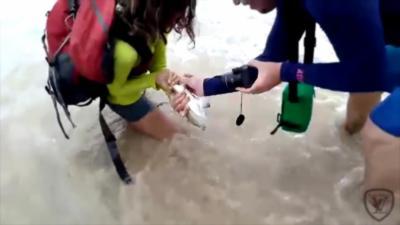 Une touriste se fait mordre par un requin après l'avoir attrapé pour une photo