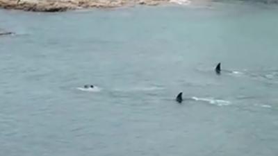 Quand deux grandes nageoires dorsales passent juste à côté de deux enfants dans une baie