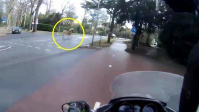 Un homme en scooter aide une femme à rattraper son cheval qui s'est échappé