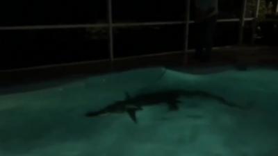 Ils appellent la police parce qu'un individu s'est incrusté dans leur piscine en pleine nuit