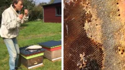 Un apiculteur pousse un coup de gueule contre les pesticides qui tuent ses abeilles