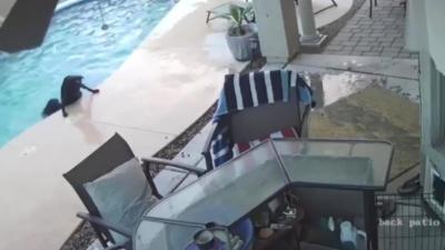 Un chien sauve son pote coincé dans une piscine