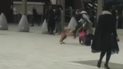 Un papa sauve son enfant d'une attaque de chien