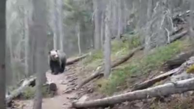 Un couple tombe sur un grizzly lors d'une randonnée dans la foret