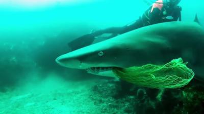 Des plongeurs prennent des risques pour sauver un requin