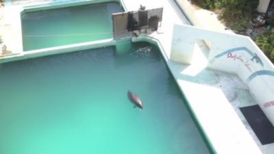 Un dauphin laissé à l'abandon dans un parc zoologique après la fermeture
