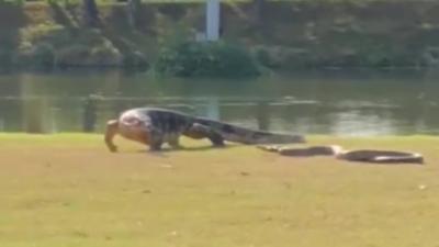 Un lézard géant se bat contre un énorme python en plein milieu d'un parc