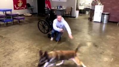 Un chien d'assistance beaucoup trop énergique pour aider les personnes handicapées