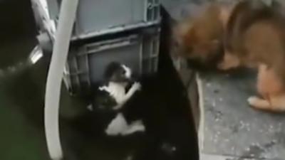 Un chien sauve un petit chat de la noyade