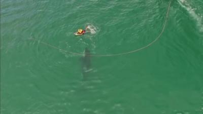 Un orque curieux s'approche dangereusement d'un kneeboarder