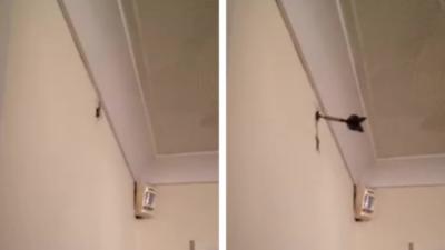 Il arrive à tuer une araignée en lançant une fléchette